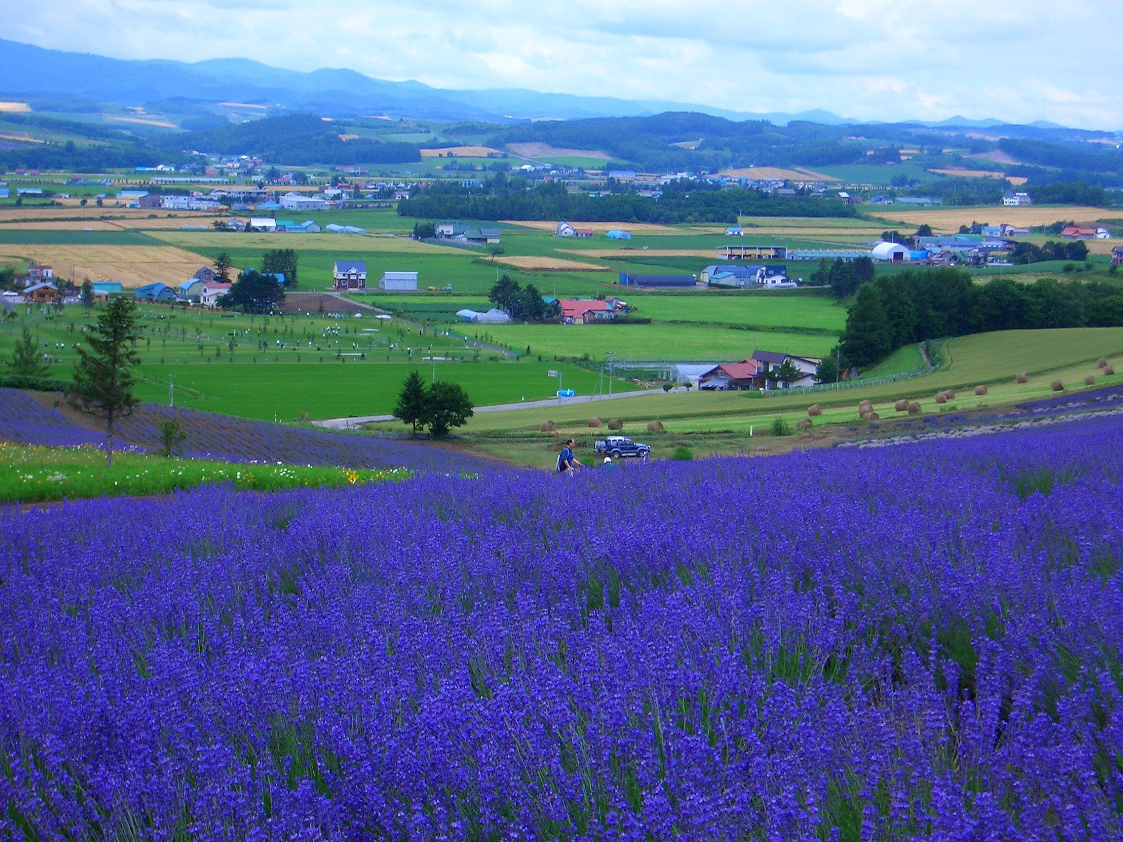 Furano / Biei Japan  City new picture : The Rainbow of Flowers in Biei and Furano, Japan