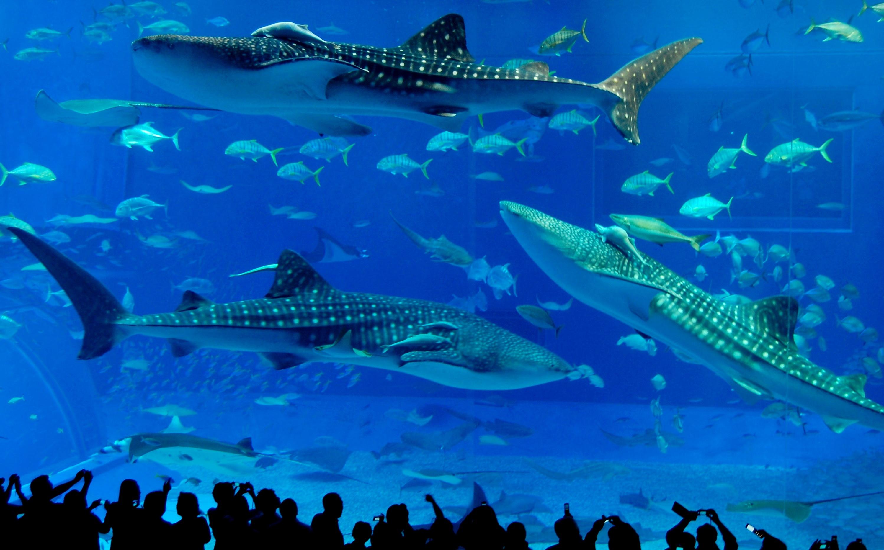 Aquarium Retireediary