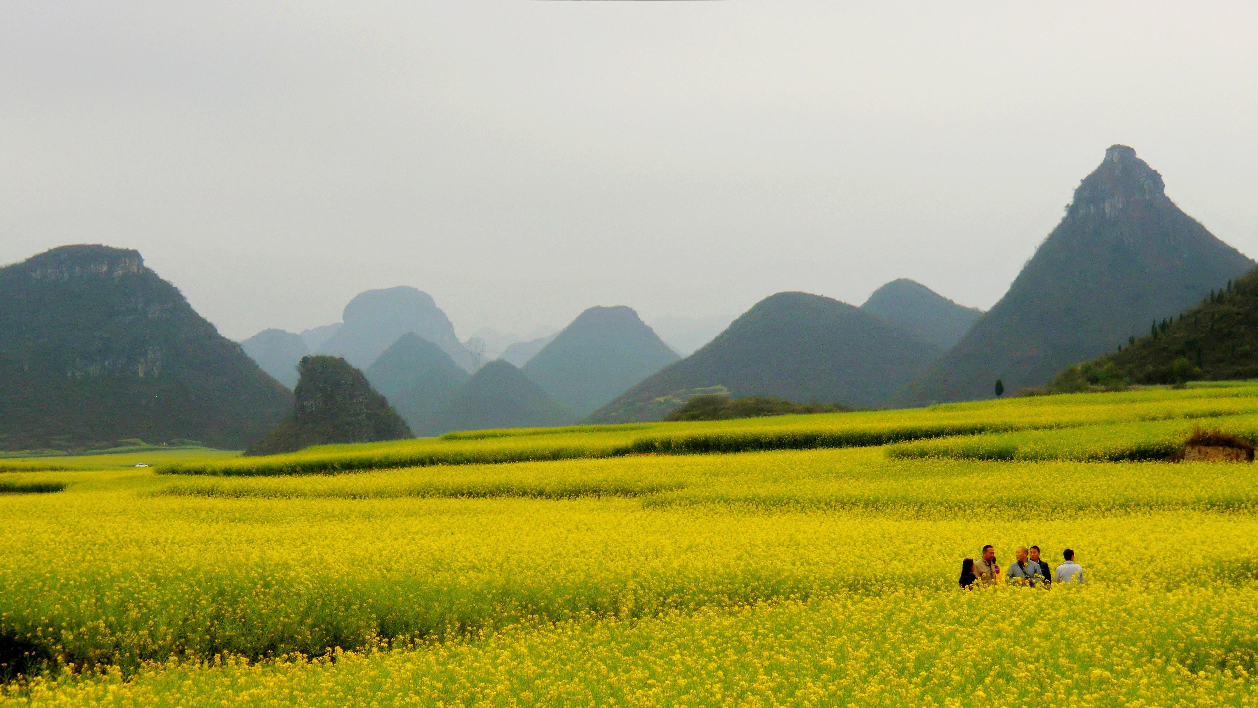 Yellow Flowers Retireediary