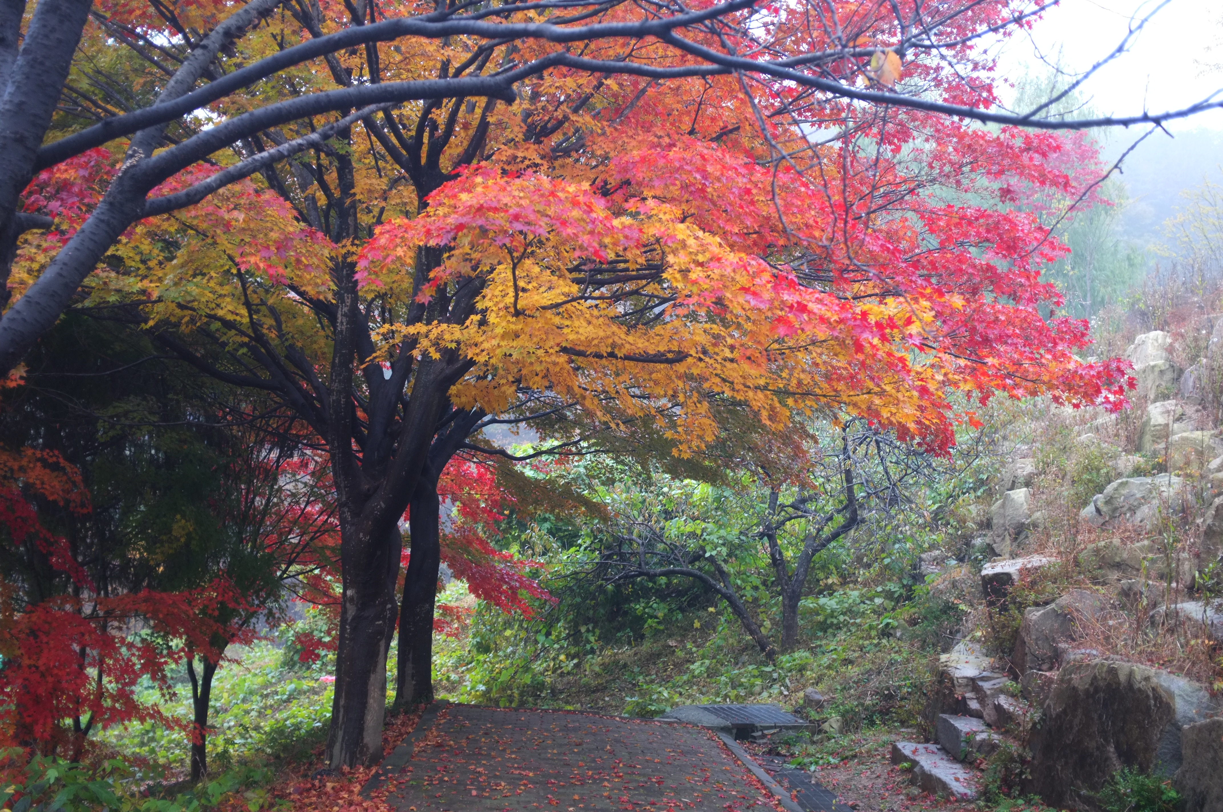 acd3ff2d56376 Too Beautiful to be Real – Fall Foliage in South Korea | retireediary