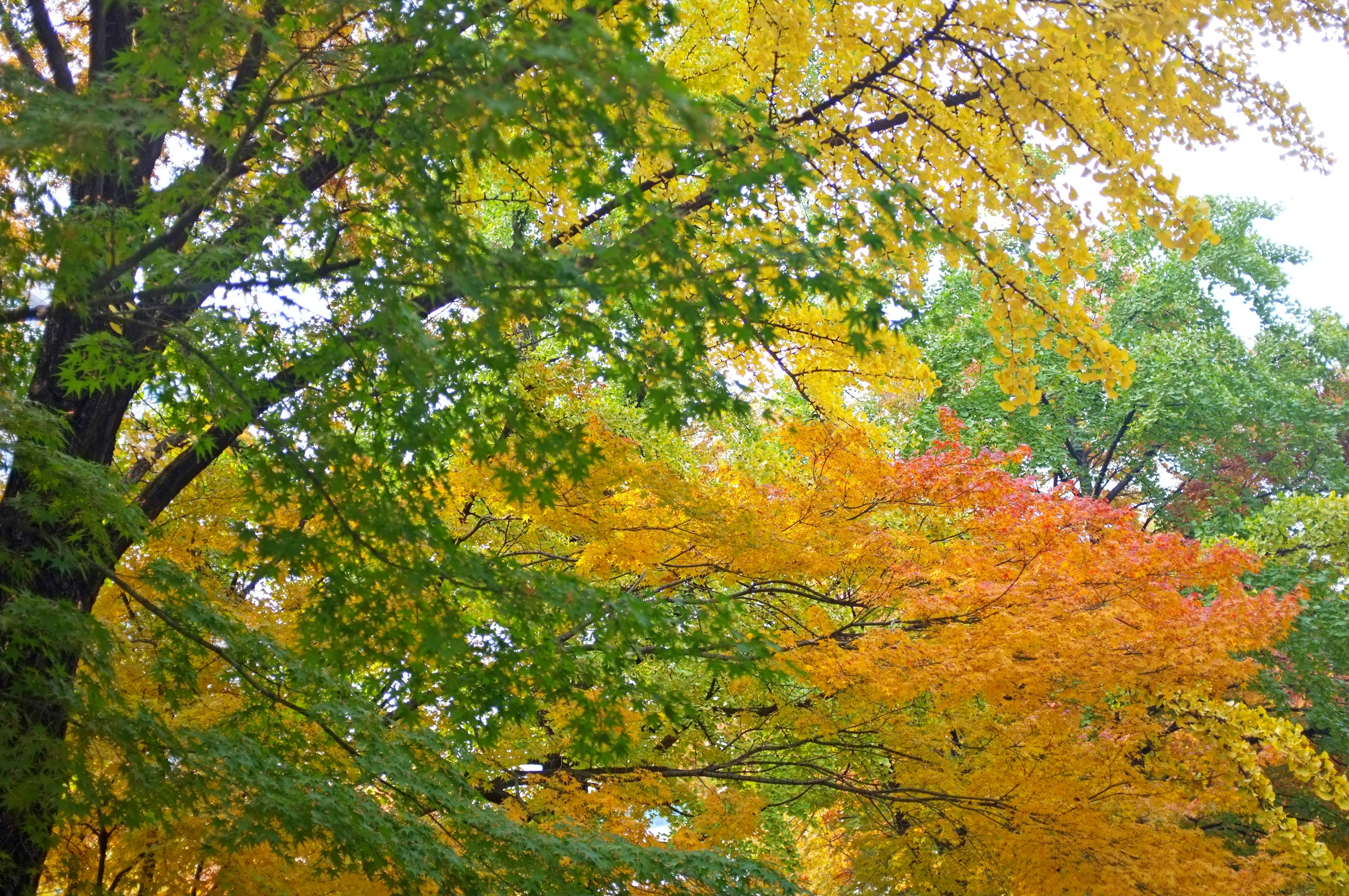 Autumn in Deoksugung Palace, Seoul   retireediary
